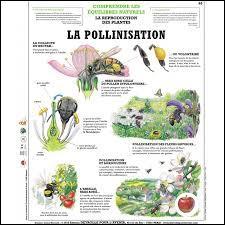 Qu'est-ce que la pollinisation ? La pollinisation, c'est :