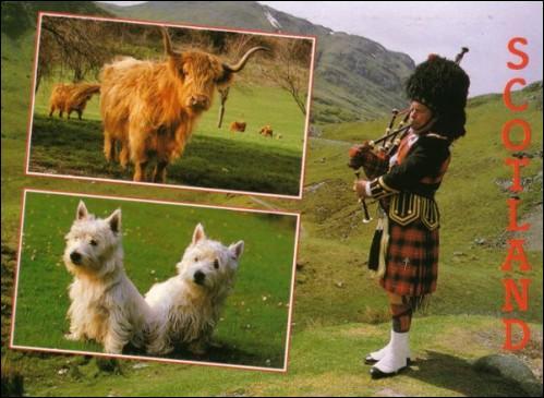 Ce bel Écossais, joueur de cornemuse, fait partie des habitants...