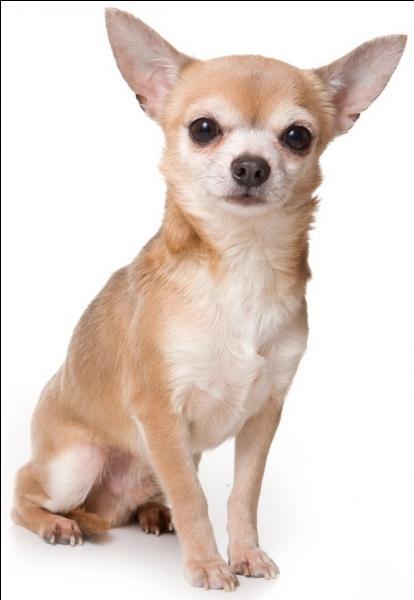Quelle race de chien donne le titre de l'un des tubes de l'été 2003 composé par DJ Bobo ?