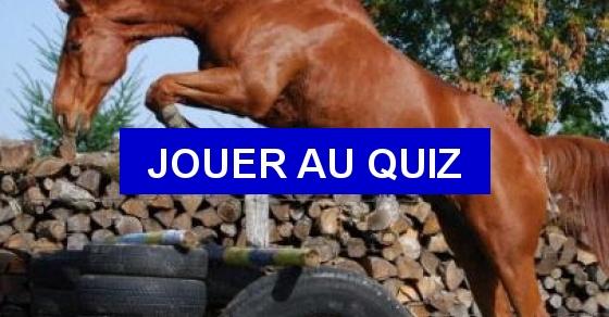 galop 1 les brosses quiz qcm chevaux equitation galop 1. Black Bedroom Furniture Sets. Home Design Ideas