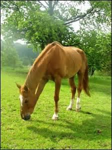 Combien le cheval possède-t-il de vértèbres lombaires ?