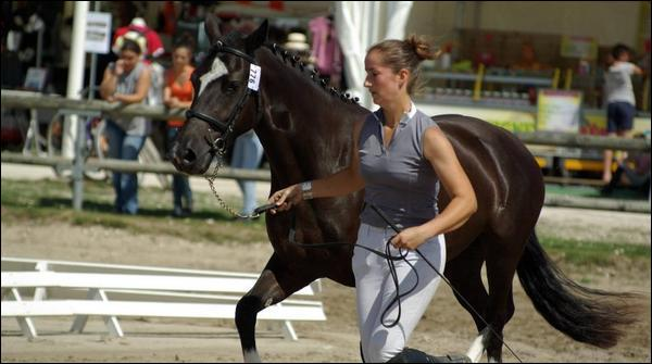 Pour présenter un cheval devant un jury, il faut que le cheval soit placé :