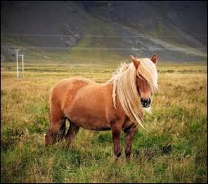 Un cheval est :