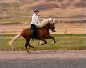 Pour un cheval qui a tendance à trousser fortement ses antérieurs, que doit-on mettre s'il porte des crampons ?