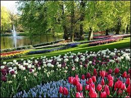 Cette carte représente le parc d'un pays où les fleurs de cette variété sont incontournables. Lequel ?