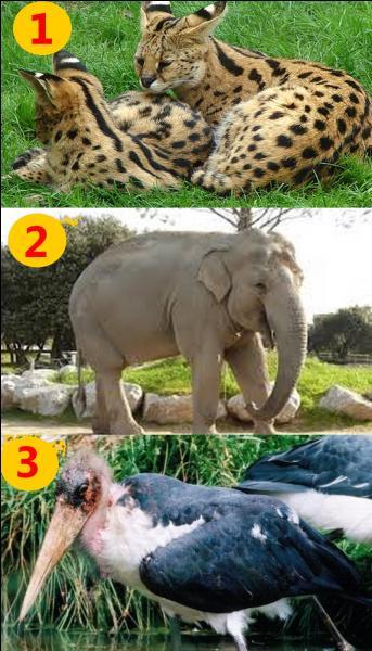 Regardez bien l'image et dites-moi parmi ces trois animaux, lequel ne vit pas sur le continent africain ?