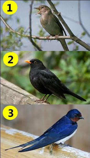 Quel oiseau a chanté Georgette Plana ?