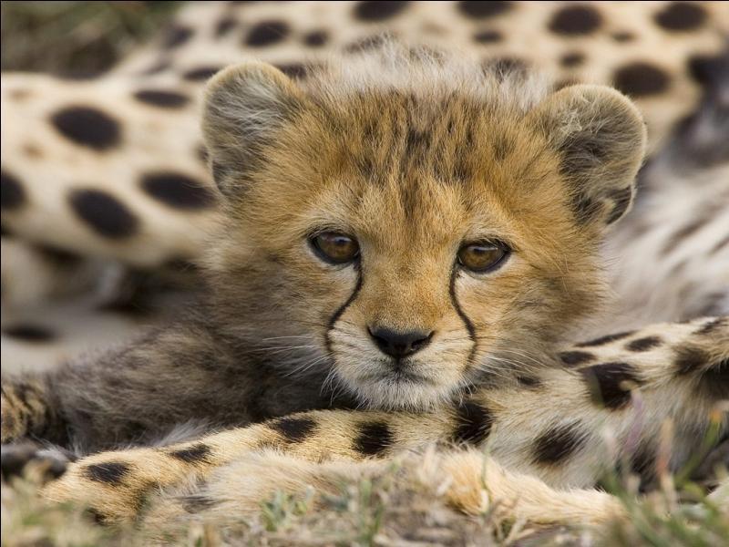 Puisque tu aimes les animaux, retrouve le nom de ce bébé félin !