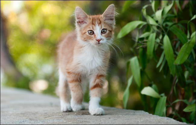 Comment s'appelle le chat de Bagou ?