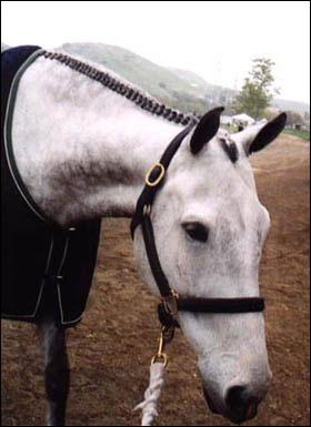 Le cheval a la crinière tressée. Qu'est-ce que c'est ?