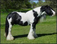 Quelle est la couleur de ce cheval ?