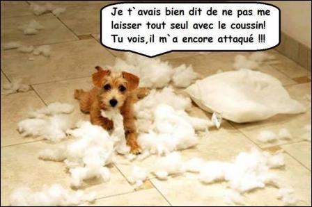 Bonne chienne francaise pour bonne sodo - 4 2