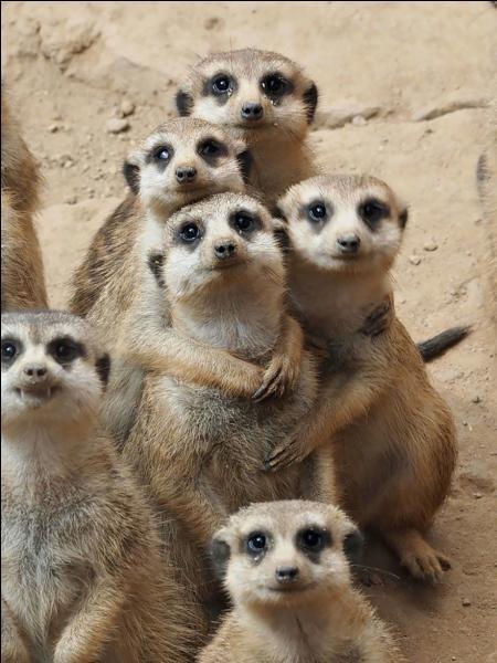 A quel pays pensez-vous en voyant ces petits animaux ?
