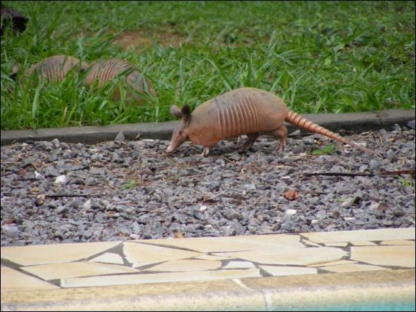 Où pensez-vous voir cet animal, attention question piège ?