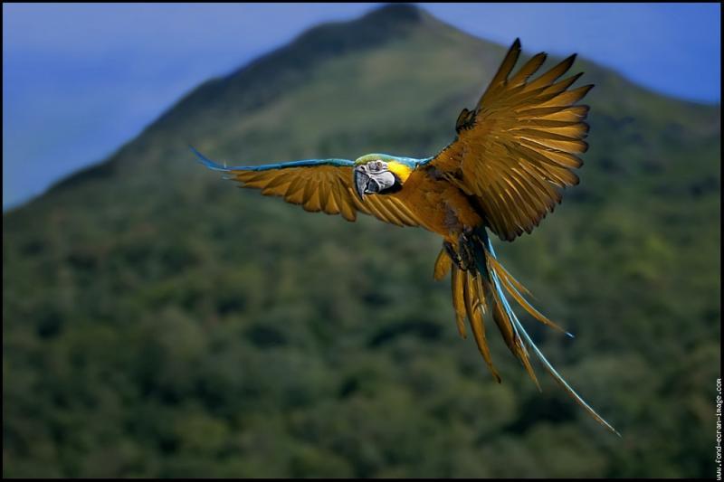 La maman perroquet cherche un endroit idéal pour le nid de ses petits.