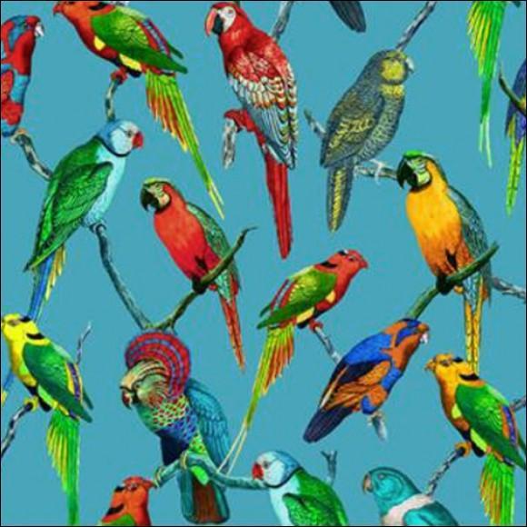 Il existe environ 370 espèces différentes de perroquets.