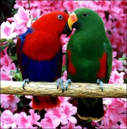 Lorsque deux perroquets se rencontrent, ils se touchent le bec s'ils sont copains.