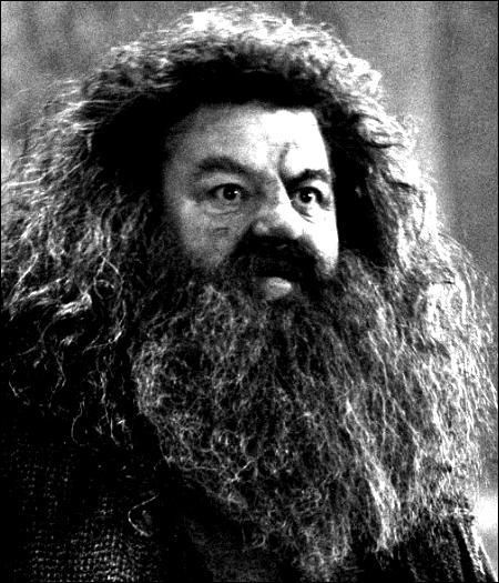 Quand Hagrid se met sur son 31, il se met aussi de l'huile de moteur dans les tifs ; que retrouve-t-on également dans sa tignasse hirsute ?