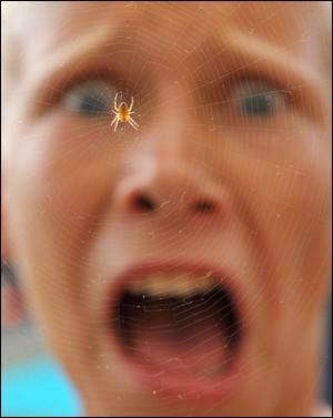 """""""Je n'aime pas beaucoup les araignées."""" Cette phrase est-elle affirmative ou négative ?"""