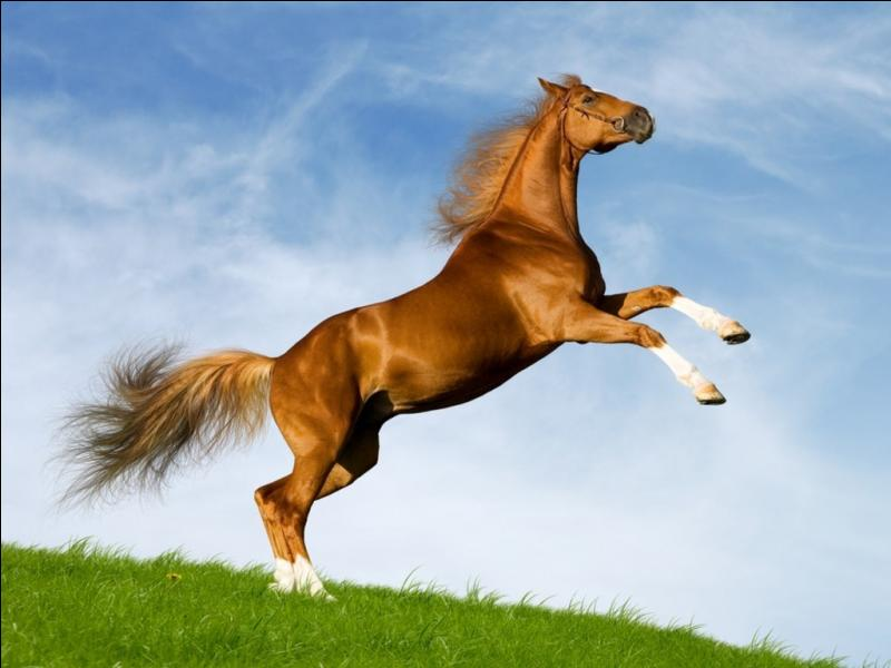 """Comment dit-on """"cheval"""" ?"""