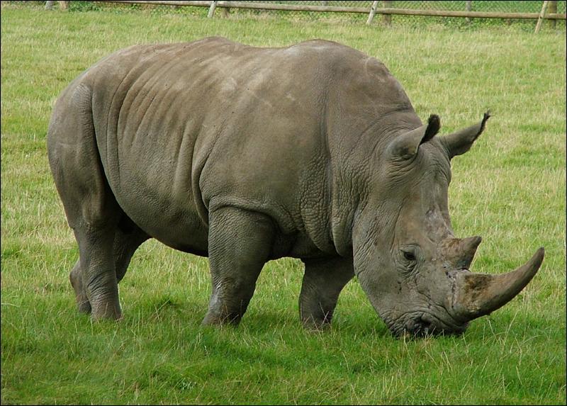 "Comment dit-on ""rhinocéros"" ?"