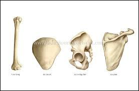 L'os pariétal fait partie du pied.