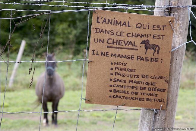 Stewball est un cheval d'une chanson d'Hugues Aufray. De quelle couleur était-il ? (Agrandissez la photo ! ) ;-)