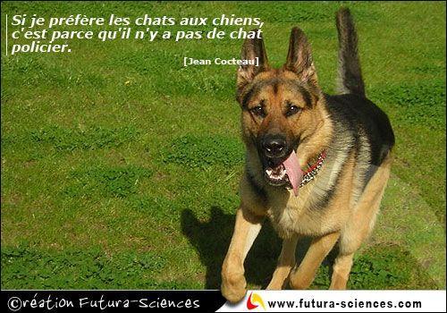 Quel était le nom du chien de Nino Ferrer, qui n'en faisait qu'à sa tête ? (Agrandissez l'image ! )