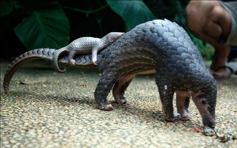 On trouve cet animal en Afrique et en Asie, comment s'appelle-t-il ?
