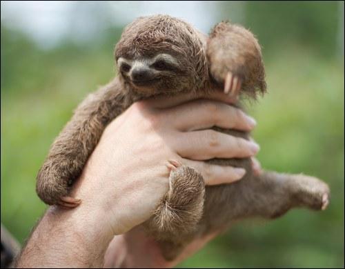 Allez, prends ton courage à deux mains, tu connais sûrement cet animal !