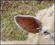 Joliment moutonnant dans les prés.