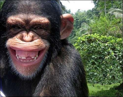 Ce n'est pas au vieux singe qu'on apprend à faire la... ' (Il est encore temps de (re) lire le descriptif ! )