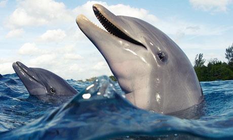 Dauphin et bébé dauphin, 1ère partie