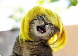 Un chat peut servir de baromètre.