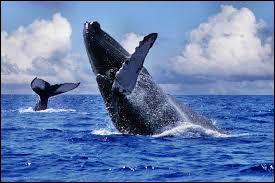 Tous les mois de juillet et d'août, à Sainte-Marie, une île appartenant à Madagascar, on peut contempler la migration des baleines. Dans quelle mer cette île baigne-t-elle ?