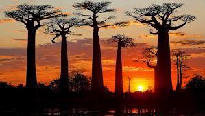 À la découverte de Madagascar