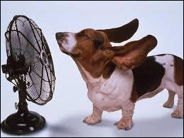 Le prochain, est un animal qui vit dans des conditions assez froides. C'est le Man...