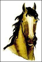 Dans ce cas, le cheval est... et le cavalier doit être...