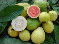 Ce fruit tropical est plus riche en vitamine C que les agrumes habituels. La ... contient aussi des quantités importantes de calcium, ce qui est peu courant chez un fruit.