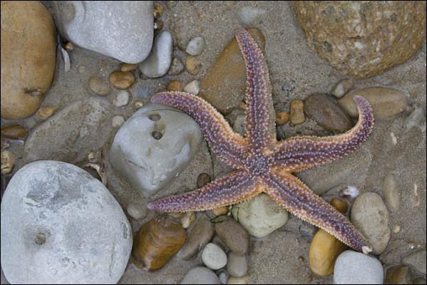 L'étoile de mer a six branches.
