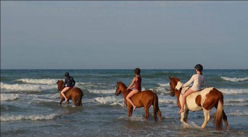 Une partie de la balade à cheval se fait dans la mer.