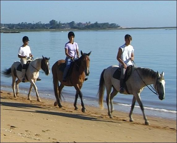 Les chevaux marchent au bord de la mer.