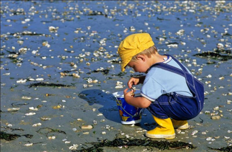 L'enfant ramasse des crabes.