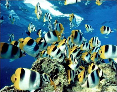 Sous l'océan, on peut trouver de petits animaux appelés...