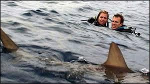 Ce film américain sorti en 2003 nous fait vivre l'angoisse d'un couple perdu en plein milieu de l'océan, en compagnie de charmants requins... Ce long-métrage s'intitule :