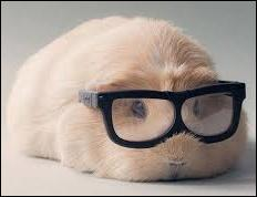 Si vous avez une mauvaise vue, mettez vos lunettes parce qu'il va falloir lire cette question jusqu'au bout pour pouvoir y répondre correctement ! Laquelle de ces expressions n'a rien à voir avec la vision ?