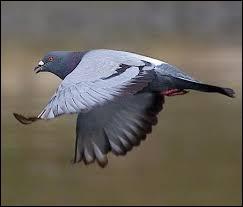 """Dans quel sport peut-on faire """"une aile de pigeon"""" ?"""