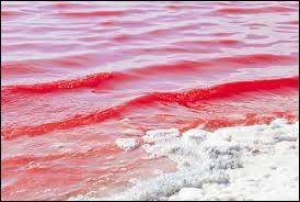 Pourquoi la mer Rouge s'appelle-t-elle ainsi ?