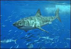 Dans quel film n'y a-t-il pas de requins ?