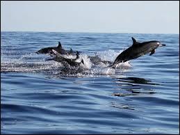 Quels animaux marins font partie du groupe des Pinnipèdes ?